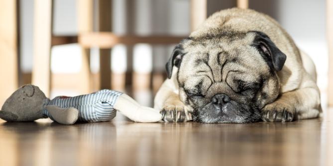 Bilde av hund på oppvarmet gulv